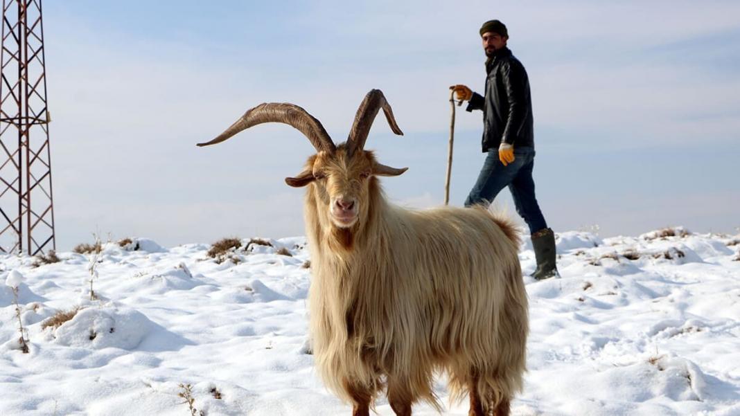 Kar hayvan yetiştiricilerini etkiledi