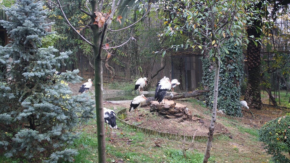 Hayvanat bahçesinde kış hazırlıkları başladı