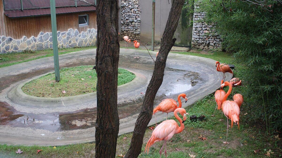 Kocaeli'nin darıca ilçesindeki hayvanat bahçesinde hayvanlar için kış hazırlıkları başladı.