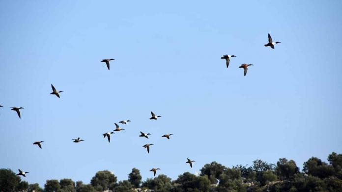 Noel baba kuş cenneti'nde 150 kuş türü var