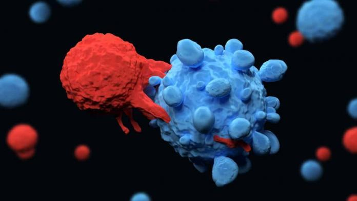 Hücresel bağışıklık koronavirüse karşı koruyor