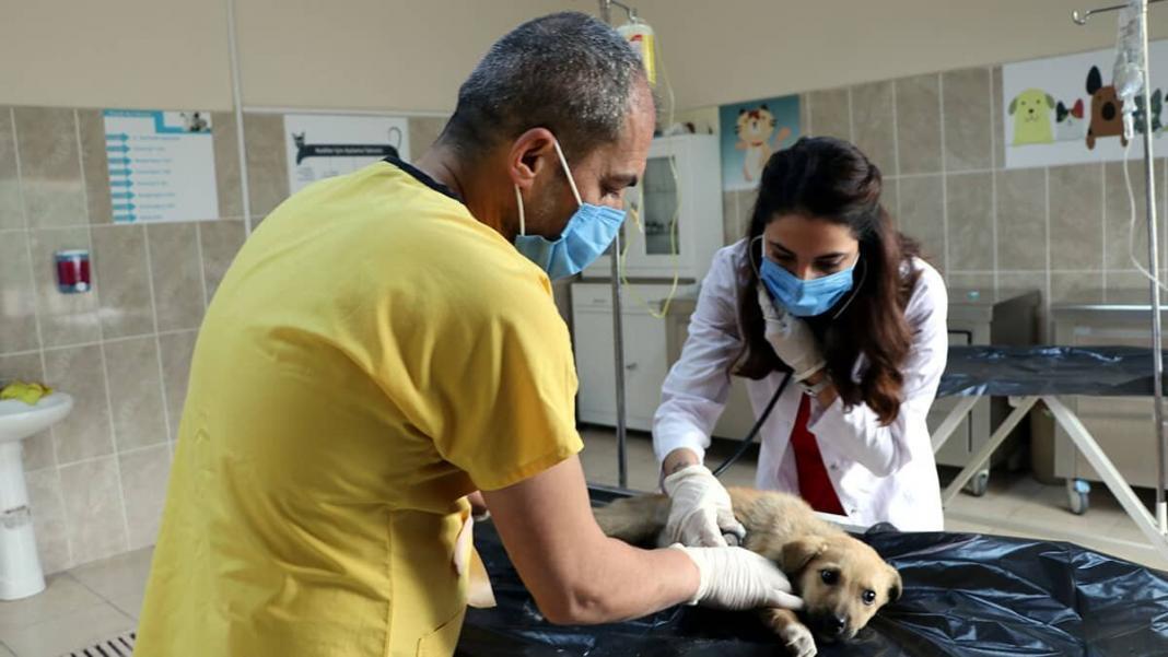 Bakımevinde 13 bin 353 hayvan tedavi edildi