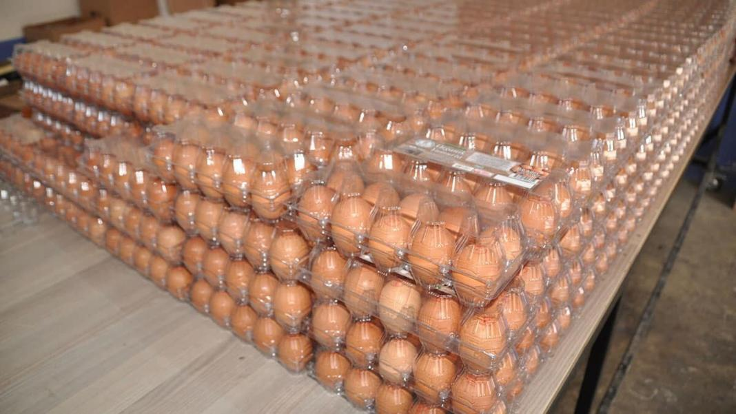 Organik yumurtaya talep yüzde 100 arttı