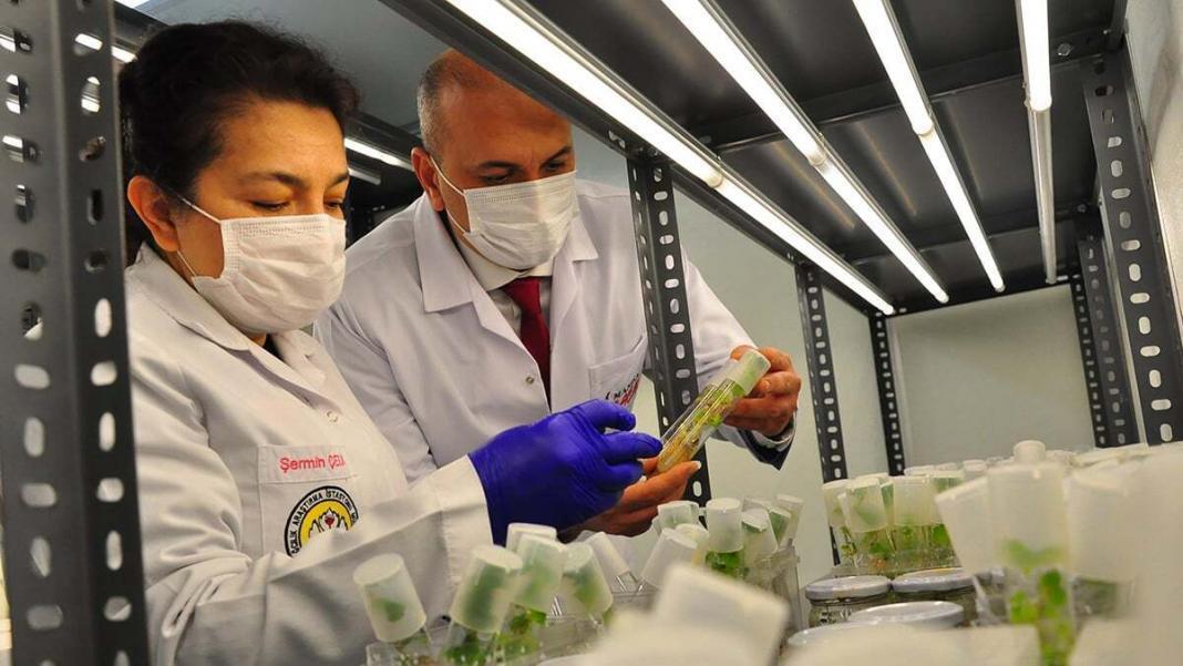 Üzüm geni, eksi 196 derecede geleceğe taşınıyor
