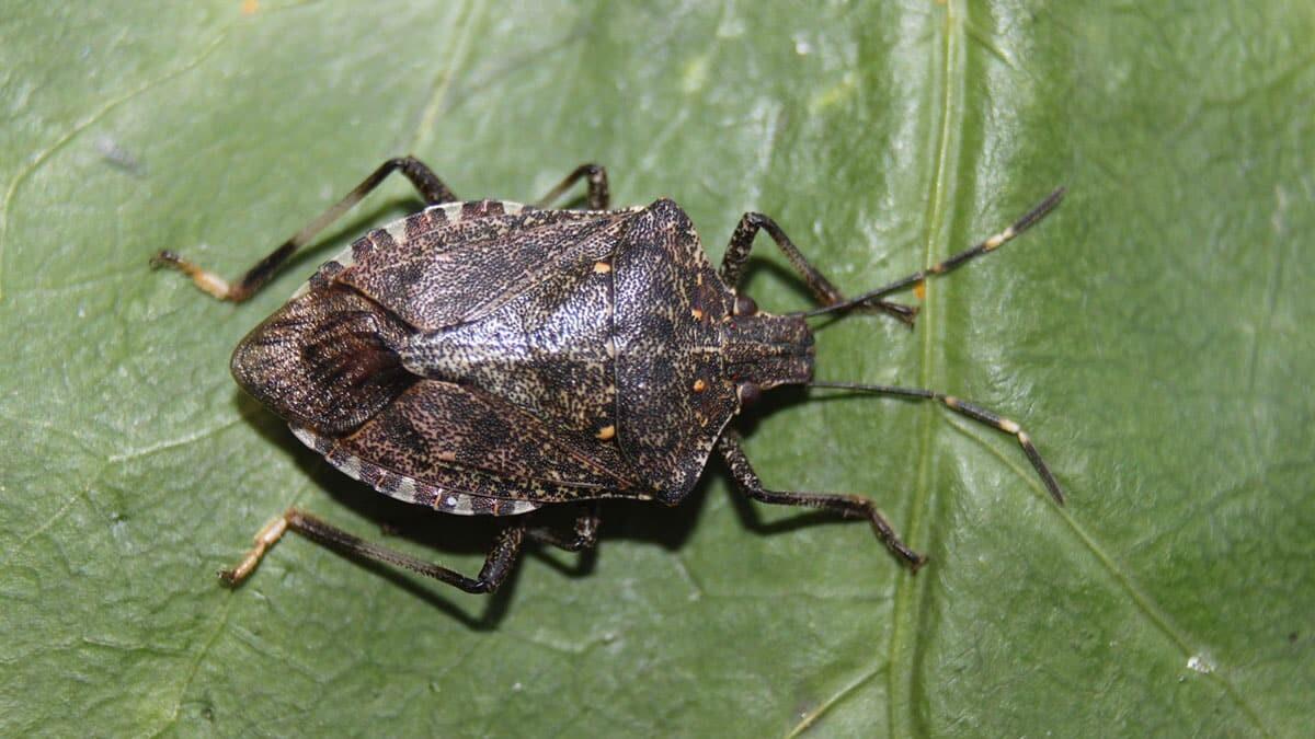 650 bin adet faydalı böcek üretimi yapılacak