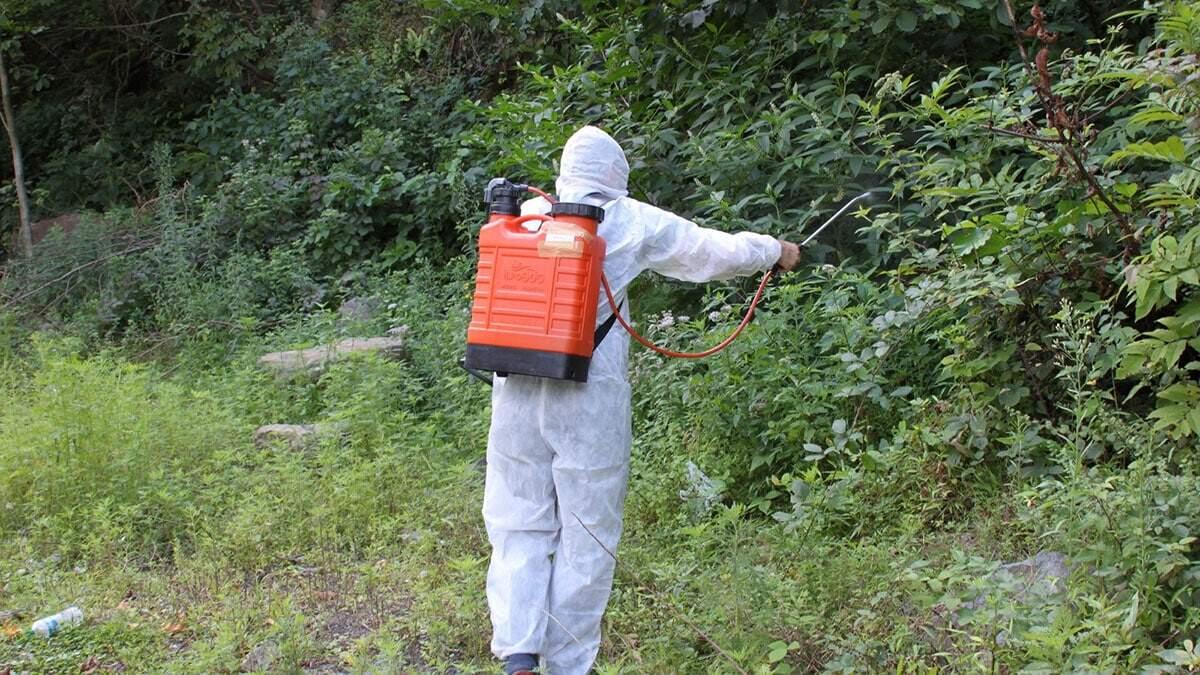 Ogm orman yangınlarından daha çok tahribata neden olan orman zararlıları ile biyolojik mücadele için 2021 yılında 650 bin adet faydalı böcek üretmeyi hedefliyor.