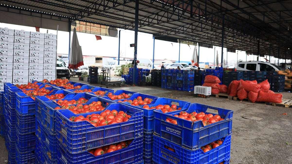 Dünyaya 850 bin ton meyve ve sebze ihracatı