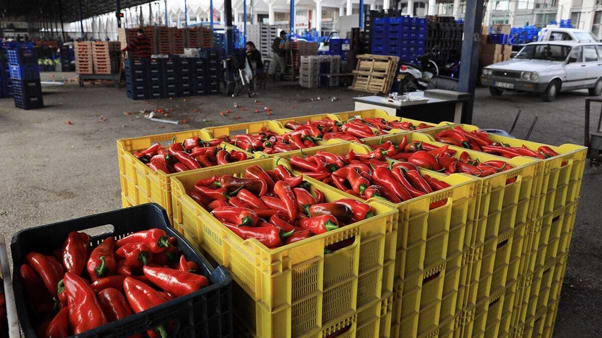 Antalya büyükşehir belediyesi toptancı hal kompleksi'nden geçen yıl 850 bin ton meyve ve sebze hem yurt içine hem de dünyanın dört bir yanına gönderildi.