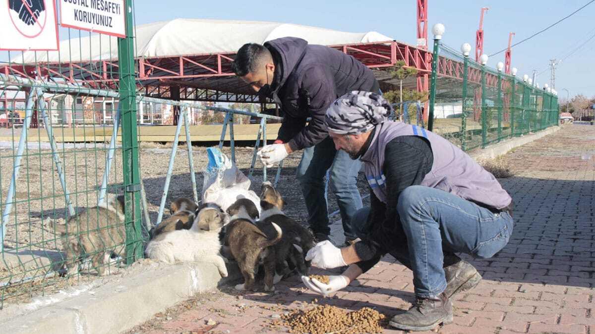Sokak hayvanları için mama ve su bırakıldı