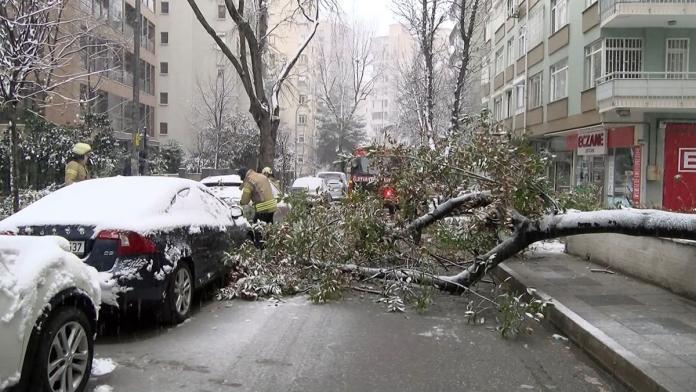 Kadıköy'de 2 otomobilin üzerine ağaç devrildi