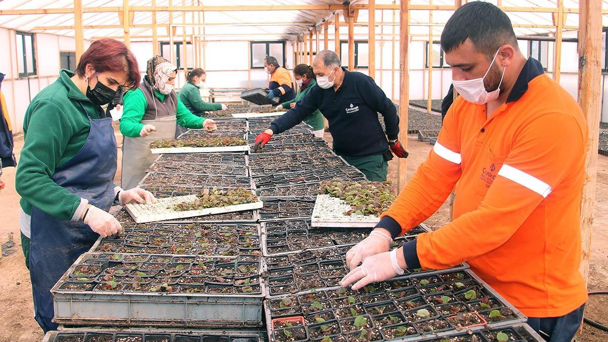 Çankaya belediyesi kendi seralarında ve kendi işçileriyle ürettiği çiçekleri bitki satış noktasında sembolik bir fiyatla vatandaşlara ulaştırıyor.