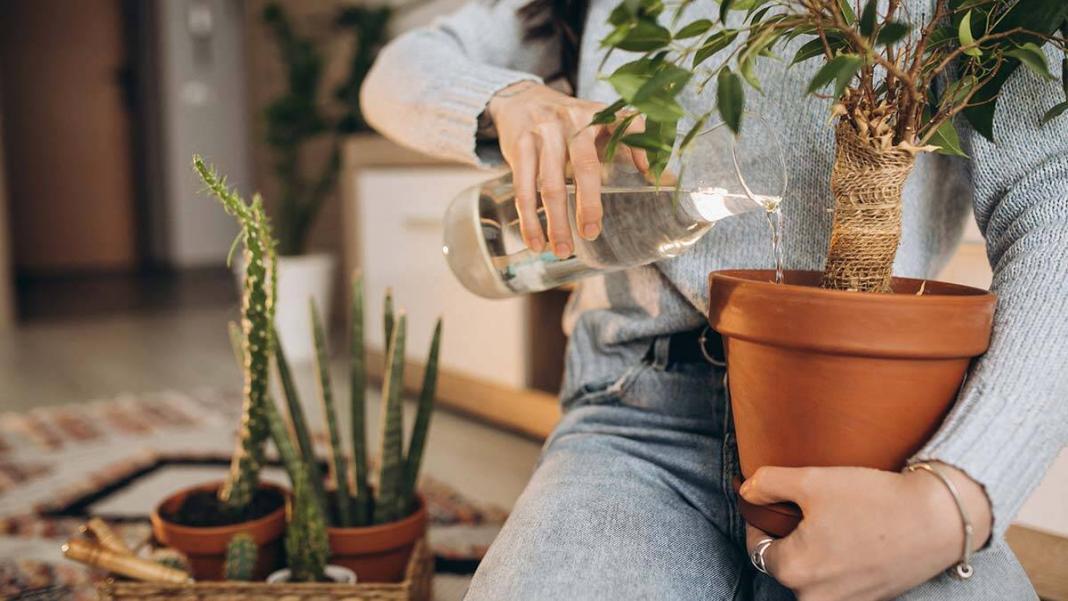 Evde bitki yetiştirmek isteyenlere 5 öneri