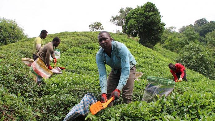 Çay işçisinin göçü başladı, uyarı geldi