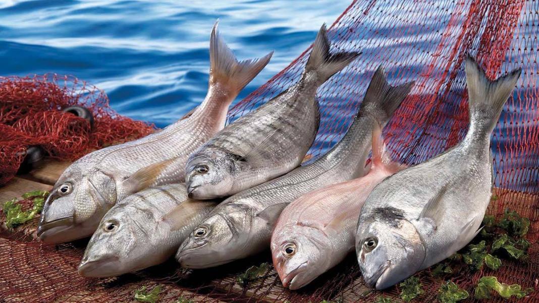 2022 yılı balıkçılık ve su ürünleri yılı ilan edildi