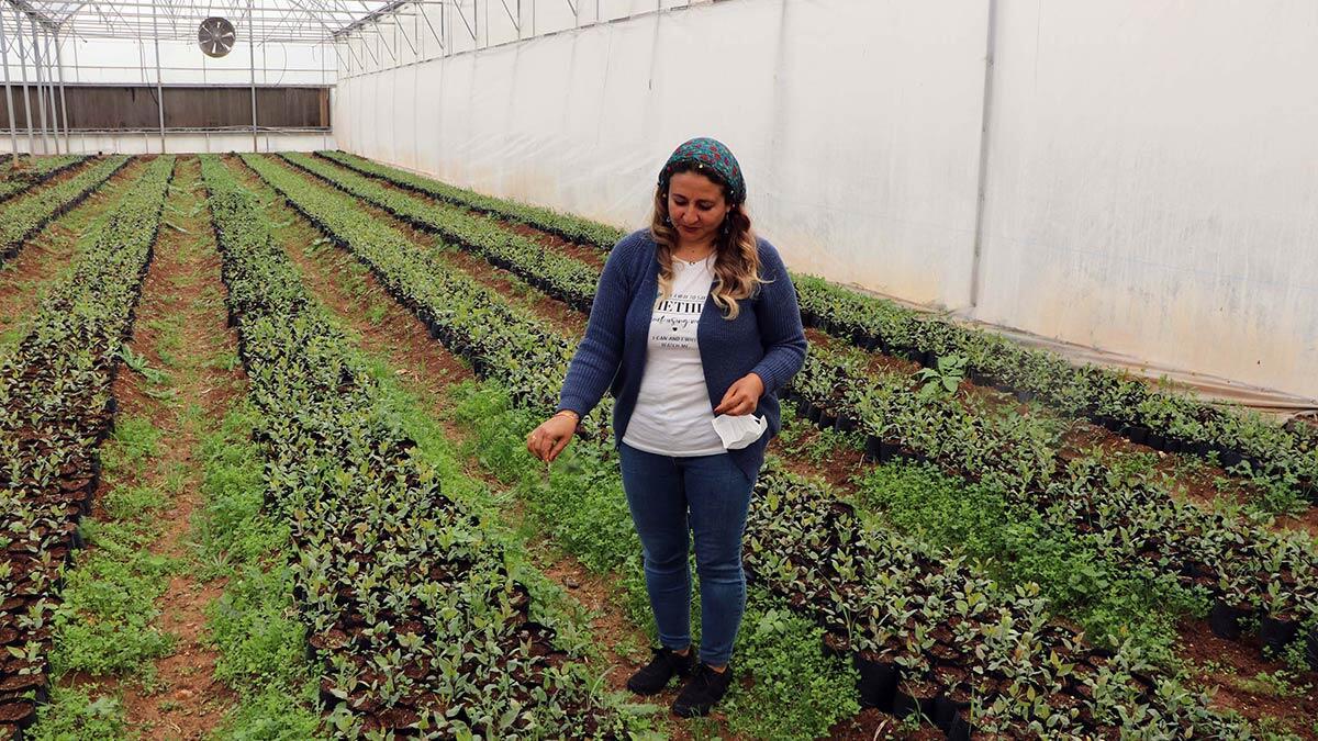 Kadınların ürettiği organik ürünler, yurt içinin yanı sıra gurbetçilerin yoğun olarak yaşadığı almanya başta olmak üzere birçok ülkeye ihraç ediliyor.