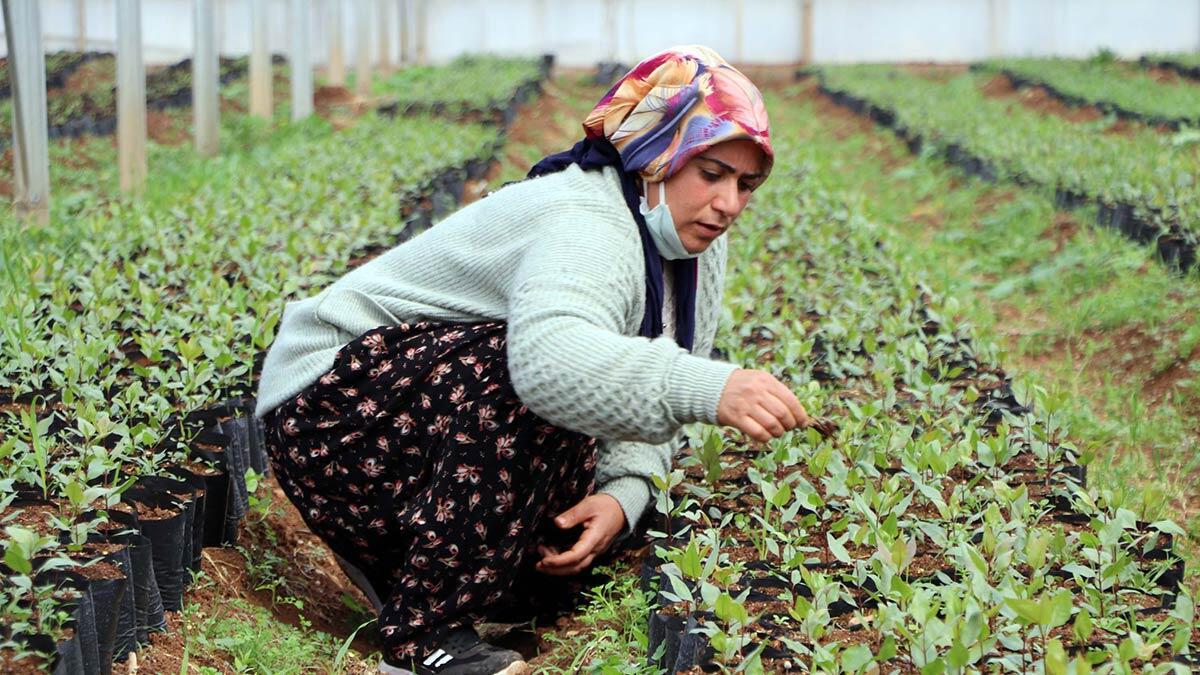 Kurulan tarım okulunda aldıkları eğitimin ardından kooperatif kurarak ürettikleri organik ürünlerden yaptıkları turşu ve reçelleri iç piyasanın yanı sıra yurt dışına ihraç etmeye başladı.