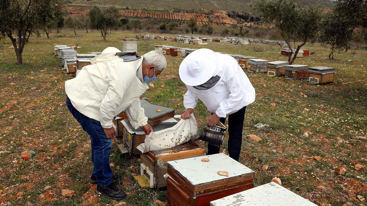 Gaziantep'te arı yetiştiricileri, yeni sezonda bal üretimi için hazırlıklarını bitirdi. Kovan temizliği, suni oğul yöntemi ile arı sayısı artırmaya yönelik çalışmalar yapan üreticilerin doğaya saldığı işçi arıların çalışmasıyla temmuz ayında bal hasadı gerçekleştirilecek.
