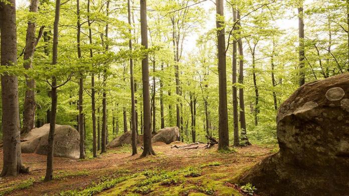 2 ilde daha ormanlara giriş yasaklandı