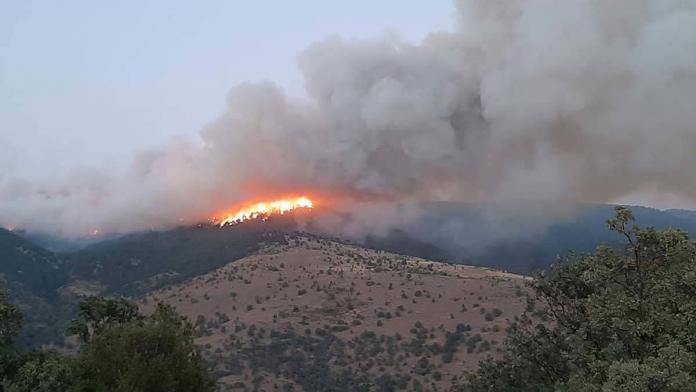 Aydın'daki yangında ekiplerin alevlere müdahalesi sürüyor
