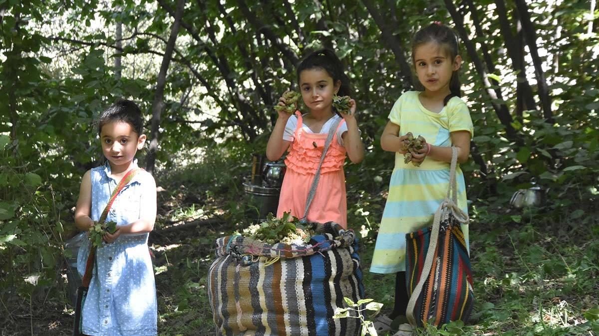 Bitlis'te fındık hasat dönemi başladı