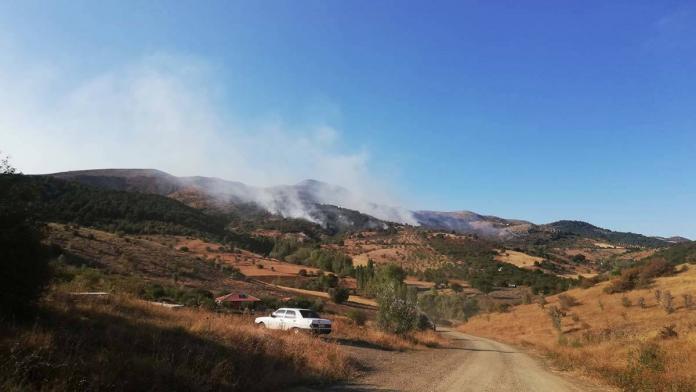 Ankara'da orman yangını çıktı