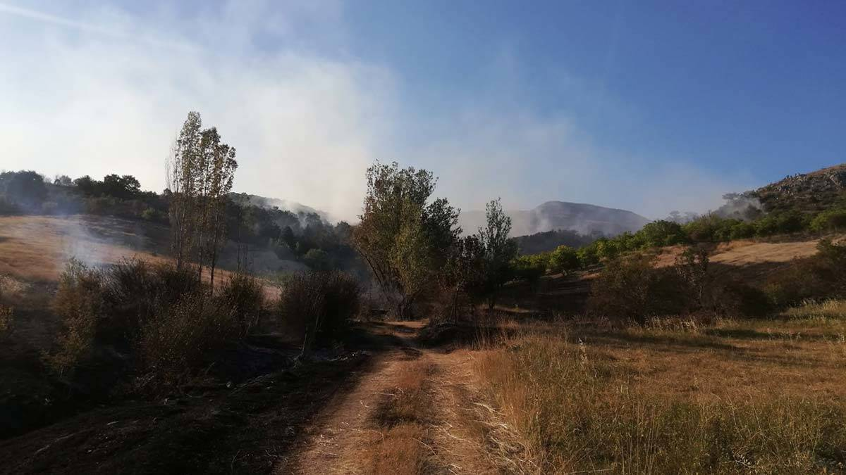 Ankarada orman yangini cikti 2 - yerel haberler - haberton