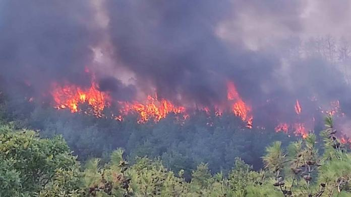 Çanakkale orman yangını ile mücadele ediyor