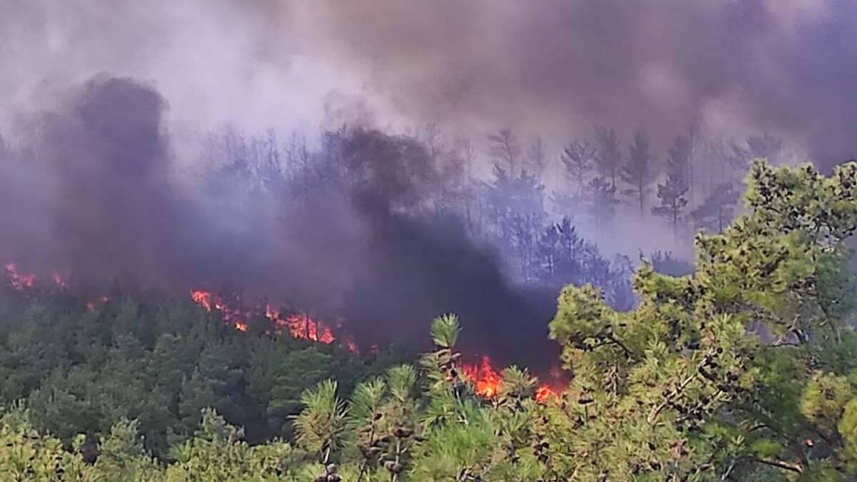 Canakkale orman yangini ile mucadele ediyor 2 - yerel haberler - haberton