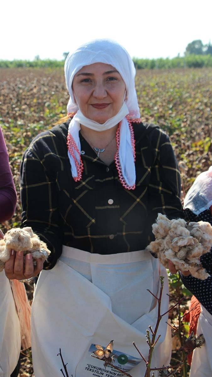 Gelincik pamuk üretimi arttı